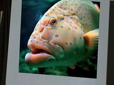 Idioms - Animals - Fish