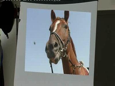 Idioms - Animals - Horse
