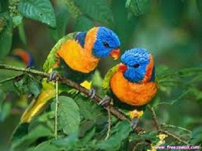 Idioms - Animals - Bird
