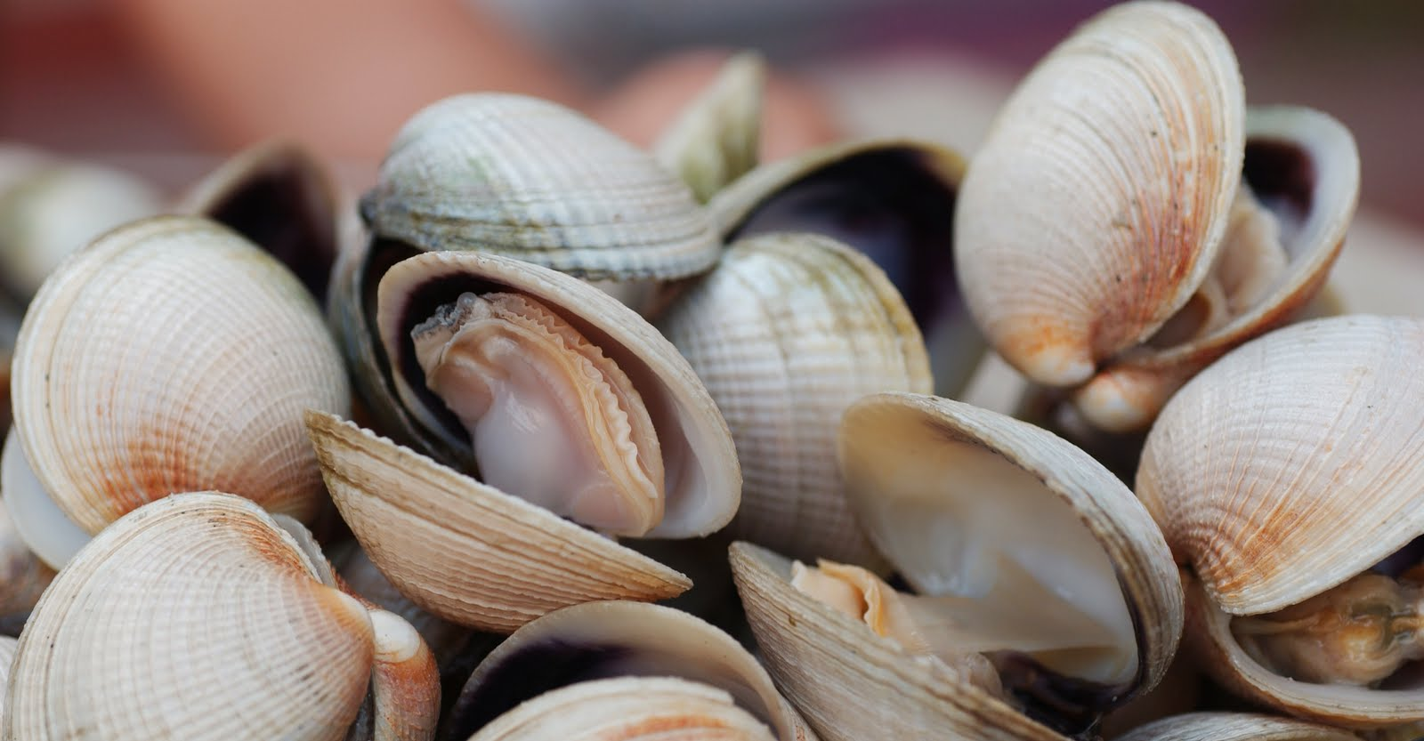 When you cook clams, you shouldn't eat the ones that don't open.