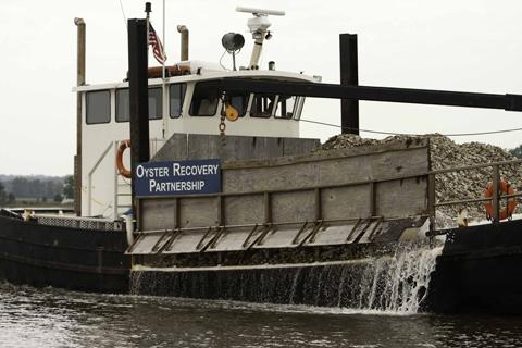Scientists Recycle Oyster Shells to Aid Chesapeake Bay