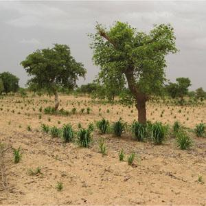 In Africa, the Greening of the Sahel