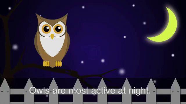Night Owl - Cú đêm
