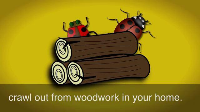 Crawl Out of the Woodwork - Từ trên trời rơi xuống, xuất hiện đột ngột