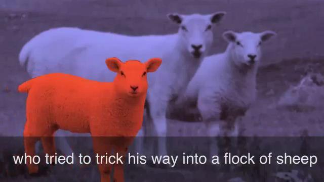 A Wolf in Sheep's Clothing - Sói đội lốt cừu
