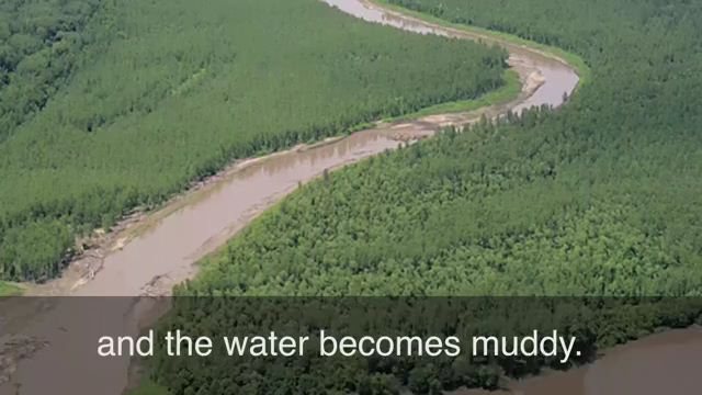 Muddy the Waters - Tung hỏa mù