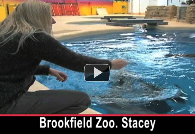 Brookfield Zoo: A Home for Dolphins Far from Any Ocean