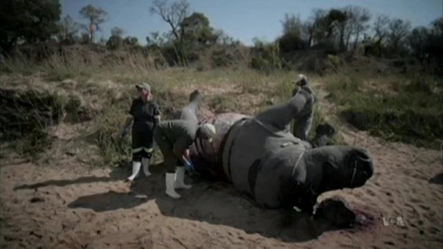 Prince William: Wildlife Poachers 'Looting Planet'