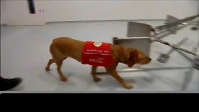 Dogs Being Trained to Detect Prostate Cancer