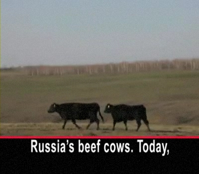 An American Cowboy Aims to Help Russia's Beef Herd
