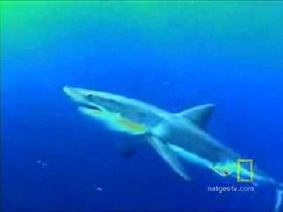 Lesson 12 : Shark Attack
