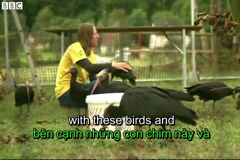 Birds V-Formation finally explained